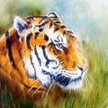 Beautiful Airbrush Painting Of A Mighty Fierce Tiger Head On A Soft Toned Abstract Gres Background  by Jozef Klopacka