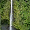 Beautiful Akaka Falls by Pamela Walton