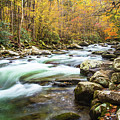 Beautiful Autumn Colors Little Pigeon River Smoky Mountains by Carol Mellema