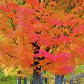 Beautiful Autumn Day by Jeelan Clark