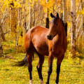 Beautiful Autumn Horse by James BO Insogna