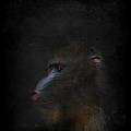 Beautiful Baboon by Maria Astedt