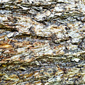 Beautiful Bark  by Susan Kinney