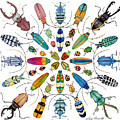 Beautiful Beetles by Lucy Arnold