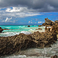 Beautiful Bermuda by Lori Coleman