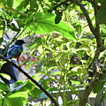 Beautiful Bird Perched In A Tree by Sherri Johnson