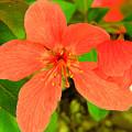 Beautiful Blossom by Jeff Swan