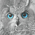 Beautiful Blue-eyed Owl by Maria Astedt