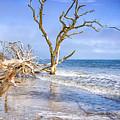 Beautiful Botany Bay Beach  by Carol Ward