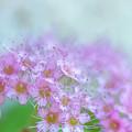 Beautiful Bouquet  by Terry Davis