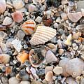 Beautiful Broken Shells by Carol Groenen