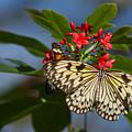Beautiful Broken Wings by Ryan Seek
