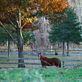 Beautiful Brown Horse by Susan Strickland