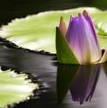 Beautiful Bud Reflection by Sabrina L Ryan