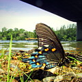 Beautiful Butterfly At The River II by Joyce Dickens