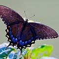 Beautiful Butterfly  by Tara Ballard