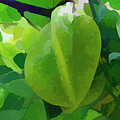Beautiful Carambola Fruit Tree by Jeelan Clark
