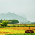 Beautiful Countryside Scenery In Autumn by Carl Ning