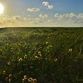 Beautiful Day by Lisa Renee Ludlum