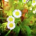 Beautiful Flowers by Cindi Soutter