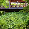 Beautiful Garden by Ken Hurst