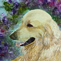 Beautiful Golden by Claire Bull