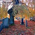Beautiful Historic Camp Hill Cemetery Halifax Nova Scotia by John Malone