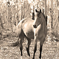 Beautiful Horse In Sepia by James BO  Insogna