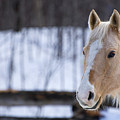 Beautiful Horse by Melanie Lefebvre