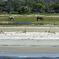 Beautiful Horses At The Beach by D Hackett
