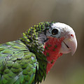 Beautiful Look At At The Profile Of A Conure Parrot by DejaVu Designs