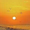 Beautiful Morning by Diana Hatcher