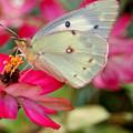 Beautiful Moth by Jean Haynes