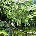 Beautiful Nature by LDS Dya