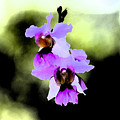 Beautiful Orchid by Nanette Hert