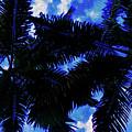Beautiful Palm In Blue Sky by Akin Samuel