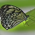 Beautiful Paper Kite Butterfly On A Green Leaf by DejaVu Designs