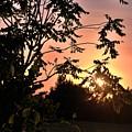 Beautiful Park Sunset View Trees by Matt Harang