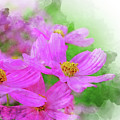 Beautiful Pink Flower Blooming For Background. by Punnarong Lotulit