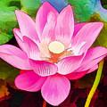 Beautiful Pink Lilies by Jeelan Clark