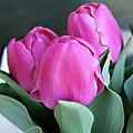 Beautiful Pink Lipstick by Sherry Hallemeier