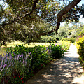 Beautiful Pond Path by Carol Groenen