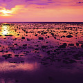 Beautiful Purple Sunset During Tide Shows Up Rocky Beach by Srdjan Kirtic