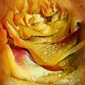 Beautiful Rose by Lali Kacharava