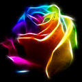 Beautiful Rose Of Colors No2 by Pamela Johnson