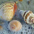 Beautiful Shells In The Surf by D Hackett