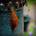 Beautiful Slug by Tanya  Searcy
