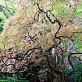 Beautiful Japanese Garden,butchart Gardens,victoria,canada 3. by Andrew Kim