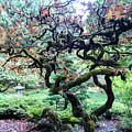 Beautiful Japanese Garden,butchart Gardens,victoria,canada 2. by Andrew Kim