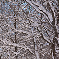 Beautiful Snow by Richard Andrews